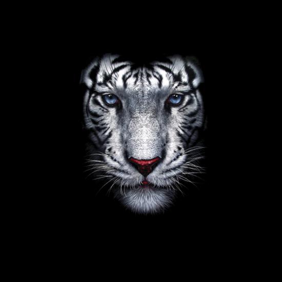 Polo-Noi-Feher-Tigris